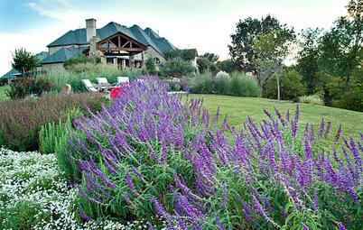 Great Design Plant: Salvia Leucantha