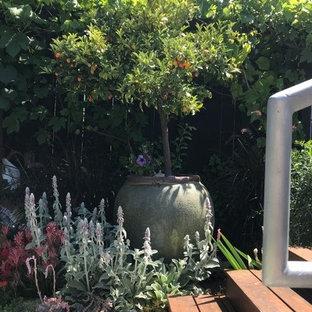 Geometrischer, Großer, Halbschattiger Mediterraner Garten im Sommer, hinter dem Haus mit Kamin und Dielen in Orange County