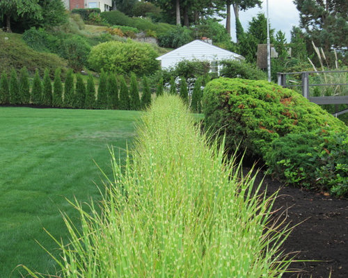 zebra grass landscape ideas designs remodels photos