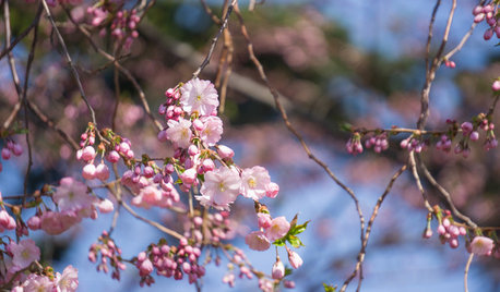 The Best Trees to Plant for Spring Interest