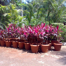 Asian Landscape by Freelance Horticulture Services