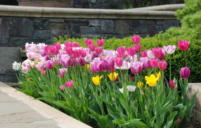 Plant Tulips for March-to-May Blooms