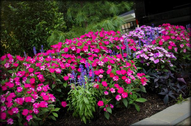 Due piante perfette per i giardini in ombra - Piante da giardino ombra ...