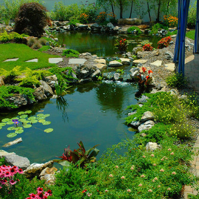 New York Home aquatic garden Design Ideas, Pictures, Remodel and Decor