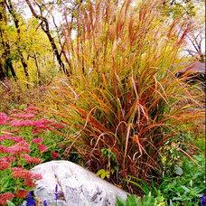 Eclectic Landscape by Anderson Design / ErosionZ.  Minnesota Landscape.