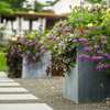 How to Water and Refresh Your Potted Plants Over the Summer
