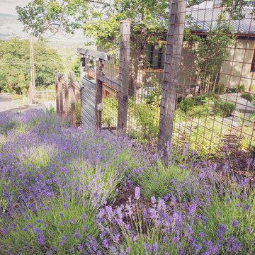 Lavandula angustifolia 'Hidcote' with Steel + Timber Deer Fence