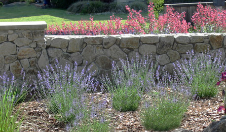 A Beginner's Guide to Scented Gardens