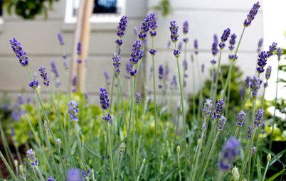 Guida Houzz: I Segreti delle Piante Aromatiche