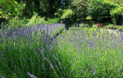 10 plantes pour un beau jardin parfumé
