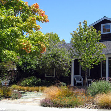 Lawn Replaced with Drought Tolerant Groundcover Surrounded by Colorful Plants