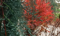 Layers of texture and fall color