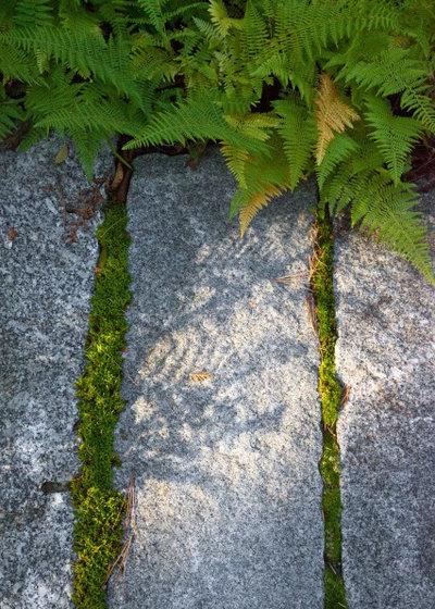 Rustic Landscape by Matthew Cunningham Landscape Design LLC