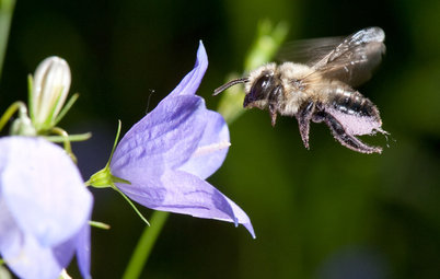 Put Out the Welcome Mat for Leafcutter Bees in Your Garden