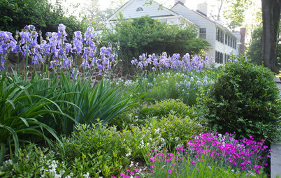 Bearded Irises Provide Spring Color From Fall Plantings