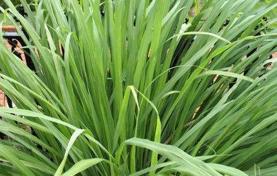 Herb Garden Essentials: Grow Your Own Zesty Lemongrass