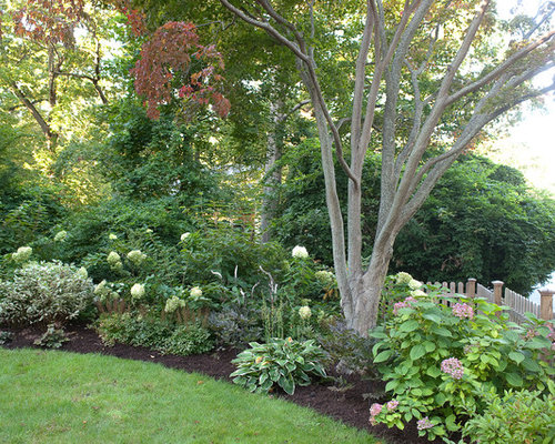 Landscaping Around A Group Of Trees : Crepe myrtle landscaping houzz