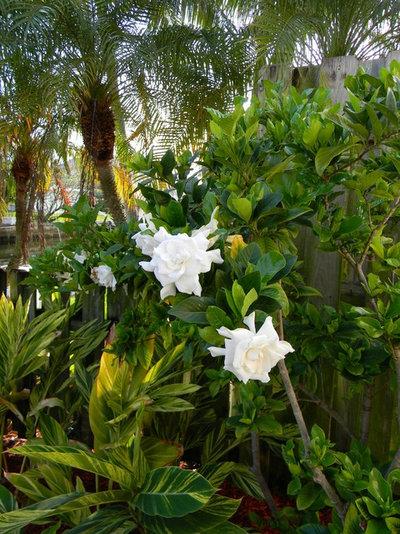 Tropicale Giardino by Jaguar Garden Designs