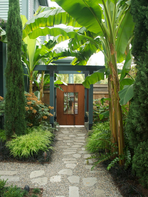 banana trees home design ideas  pictures  remodel and decor