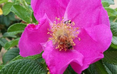 Es wird wild: In 8 Schritten zum insektenfreundlicheren Garten