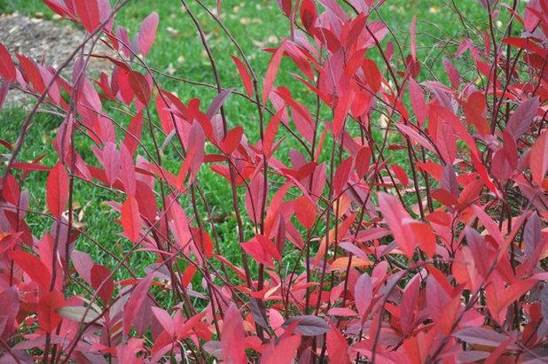 Eclectic Landscape by U. of Maryland Arboretum & Botanical Garden