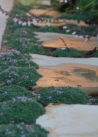 Piante Tappezzanti Calpestabili : Giardino come usare le piante calpestabili striscianti e