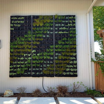 Living Wall - Vertical Garden With Succulents, Grasses and Flowering Plants.