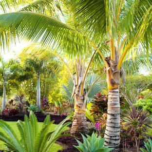 Idee per un giardino tropicale dietro casa