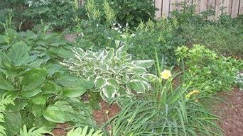 Low Maintenance Perennial Gardens