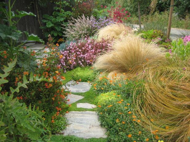 Giardino: Come Usare le Piante Calpestabili Striscianti e Tappezzanti