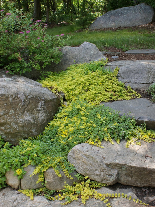 Landscape Stone Ground Cover : Creeping jenny home design ideas pictures remodel and decor