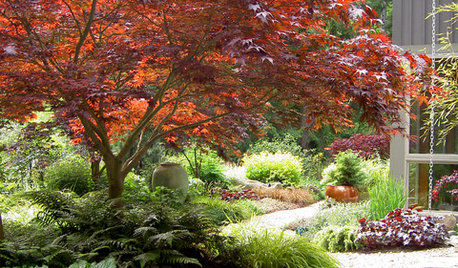11 Japanese Maples for Breathtaking Color and Form