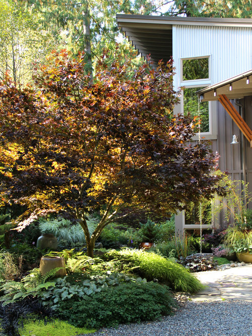 Seattlefireglow Japanese Maple Garden Design Ideas Renovations