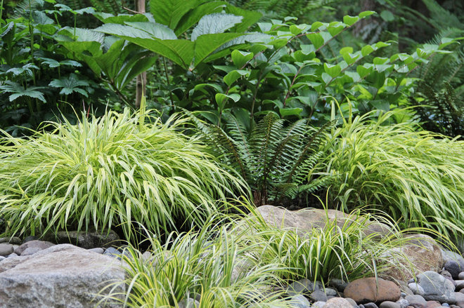 Ideas For Landscaping Wet Shady Area PDF on Landscaping Ideas For Wet Backyard id=23881