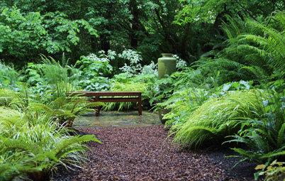 Pregunta al experto: Ideas para un jardín lleno de sombra y misterio