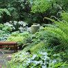 9 Top Native Plants for Beginning Gardeners