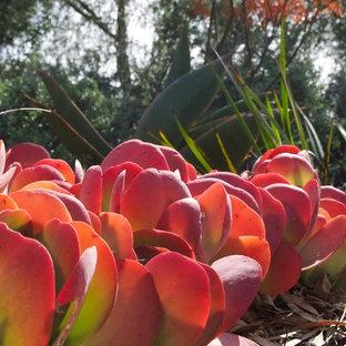 Immagine di un grande giardino xeriscape mediterraneo esposto a mezz'ombra dietro casa in estate con un ingresso o sentiero e pacciame