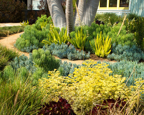 Drought Tolerant Backyard Designs image of drought tolerant plants evergreen 13472 Drought Tolerant Landscape Design Ideas Remodel Pictures Houzz