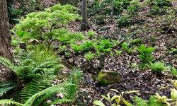 March 2019 in the fern glen