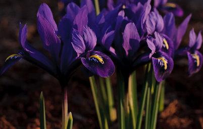 Great Lakes Gardener's March Checklist