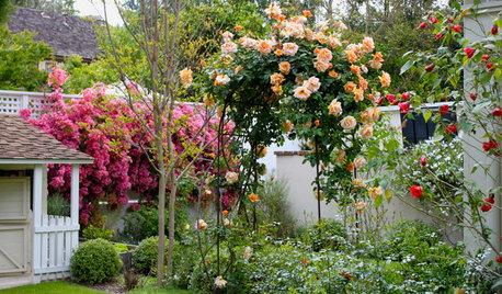 Как правильно: посадить плетистую и штамбовую розу весной