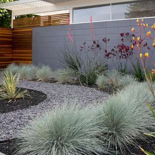 Inspiration for a midcentury modern landscaping in San Francisco.