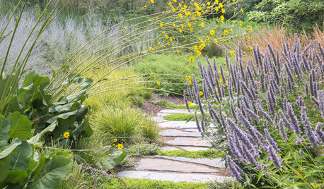 Gorgeous Yellow-and-Blue Plantings