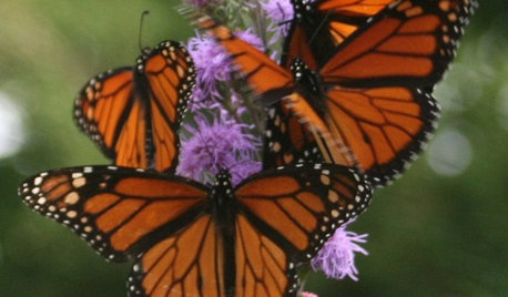 Butterfly Gardening: Delight the Eyes With Living Sculptures