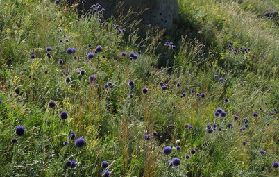 Let Nature Inspire Your Landscape: Grasslands to Garden