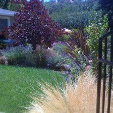 Landscape by Dig Your Garden Landscape Design