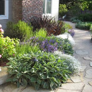 Mediterranean Garden in San Anselmo, CA