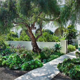 This is an example of a mediterranean courtyard garden in San Diego.