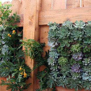 Design ideas for a mediterranean garden in Santa Barbara.