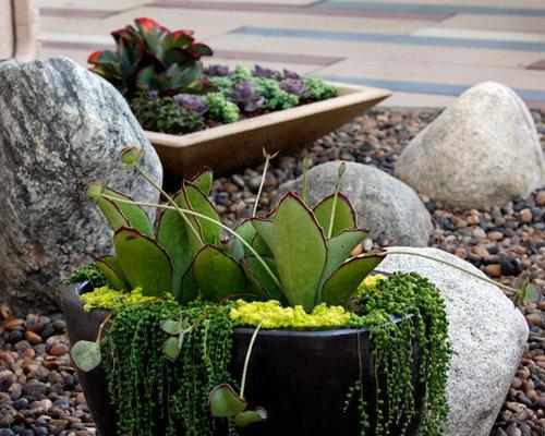 Succulent Garden – Succulent Garden Design Plans